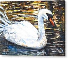 Prince Of Swans Acrylic Print