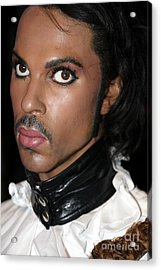 Prince Acrylic Print by Sophie Vigneault