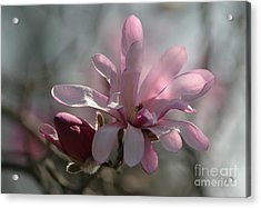 Pristine Pastels Acrylic Print by Living Color Photography Lorraine Lynch