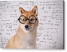 Professor Dog Acrylic Print by Eric Jung