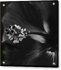 Projection In Black And Whiite Acrylic Print