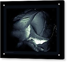 Prolong Acrylic Print by Monroe Snook