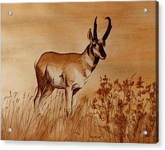 Acrylic Print featuring the painting Pronghorn Antelope by Cindy Wright