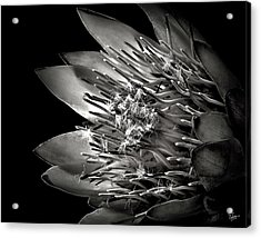 Protea In Black And White Acrylic Print