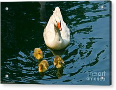 Proud Mother  Acrylic Print by Mitch Shindelbower