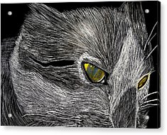 Acrylic Print featuring the drawing Prowl by Lisa Brandel