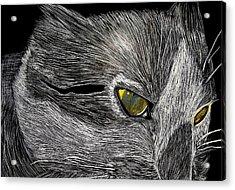 Prowl Acrylic Print by Lisa Brandel