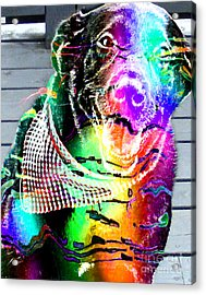 Psychedelic Black Lab With Kerchief Acrylic Print by Barbara Griffin
