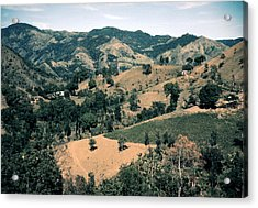 Puerto Rico. Forest And Clear Cut Acrylic Print by Everett