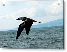 Puerto Vallarta - A Bird In Flight  Acrylic Print