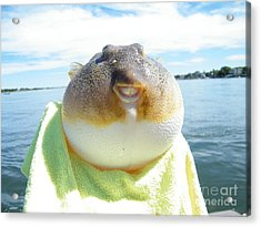 Puffer Smile Acrylic Print by Laurence Oliver