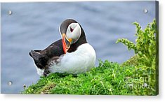 Acrylic Print featuring the photograph Puffin by Lynn Bolt