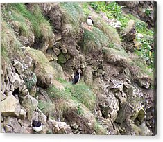 Puffins  Acrylic Print by George Leask
