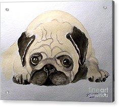 Pug Acrylic Print