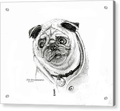 Acrylic Print featuring the drawing Pug by Jim Hubbard