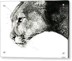 Puma  Acrylic Print by Ian Tullock