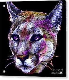 Puma Portrait Acrylic Print