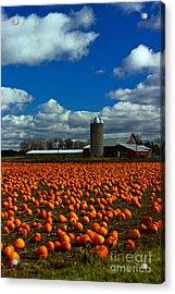 Pumpkin Farm Acrylic Print by Randall  Cogle