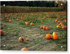 Pumpkin Patch Acrylic Print by LeeAnn McLaneGoetz McLaneGoetzStudioLLCcom