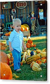 Pumpkin Acrylic Print by Phil Burton