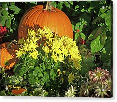 Pumpkins And Mums Acrylic Print
