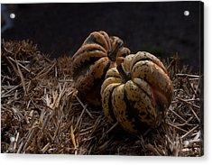 Pumpkins Acrylic Print by April Bielefeldt