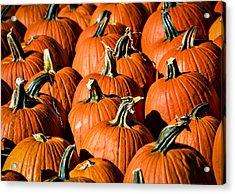 Pumpkins Galore Acrylic Print by Julie Palencia
