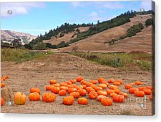 Pumpkins Of Marin Acrylic Print