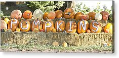 Pumpkins P U M P K I N S Acrylic Print by James BO  Insogna