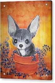 Pup In A Pot 11 Acrylic Print