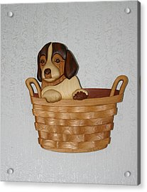 Pup In Basket Acrylic Print by Bill Fugerer