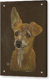 Pup Acrylic Print by Stephanie L Carr
