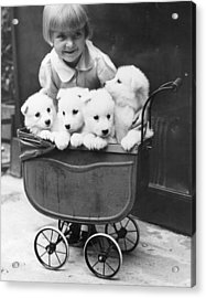 Puppies In A Pram Acrylic Print by Fox Photos