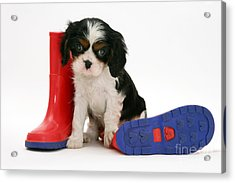 Puppies With A Childs Rain Boots Acrylic Print by Jane Burton