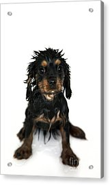 Puppy Bathtime Acrylic Print by Jane Rix