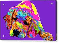 Puppy  Acrylic Print by Chandler  Douglas