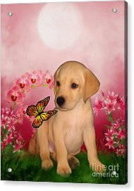 Puppy Innocence Acrylic Print by Smilin Eyes  Treasures