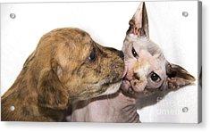 Puppy Kissing Alien Cat Acrylic Print