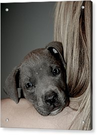 Puppy Love Acrylic Print by Janet Smith
