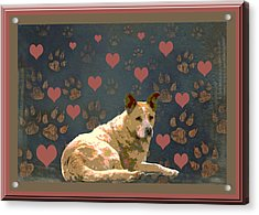 Puppy Love Acrylic Print by One Rude Dawg Orcutt