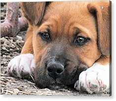 Puppy Love Acrylic Print by Tammy Herrin