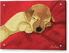 Puppy Nap Time Acrylic Print