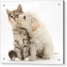 Puppy Nuzzles Kitten Acrylic Print by Jane Burton
