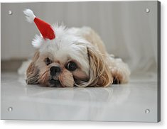 Puppy Wearing Santa Hat Acrylic Print by Sonicloh