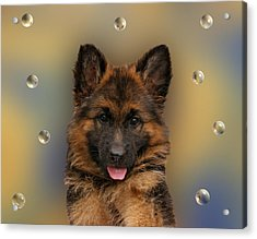 Puppy With Bubbles Acrylic Print by Sandy Keeton