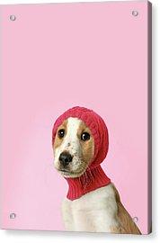 Puppy With Hat Acrylic Print by Retales Botijero