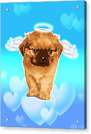 Puppy With Wings And Halo Acrylic Print