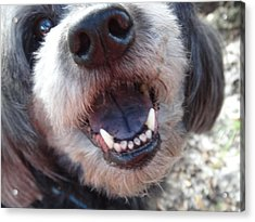 Acrylic Print featuring the photograph Puppyface by Ginny Schmidt