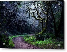 Purisima Creek Trail Acrylic Print