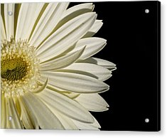 Purity Acrylic Print by Jyotsna Chandra